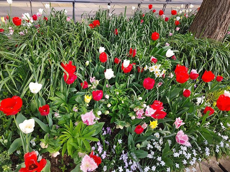 いっぱいの花